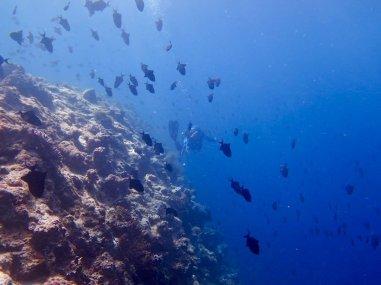 Plonger au sud de Mayotte le long de tombants extraordinaires