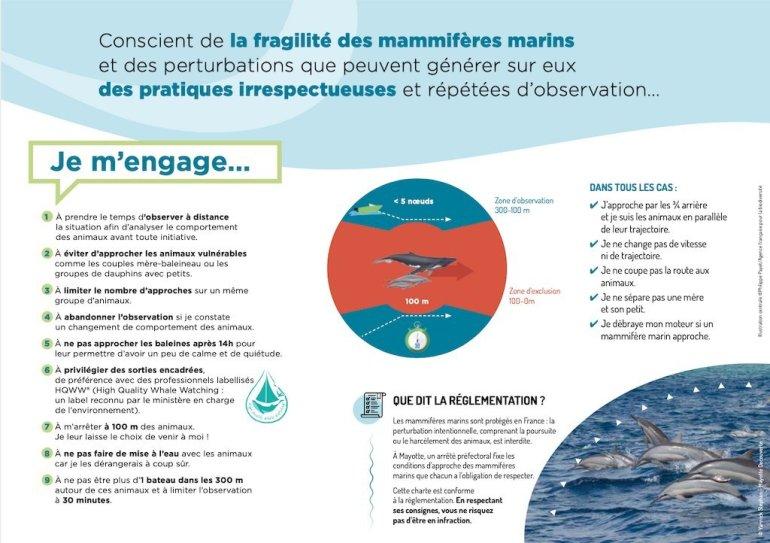 Règles d'approches pour plonger avec les baleines à Mayotte
