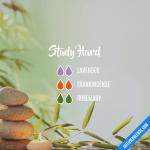 Study Hard Diffuserblends Com