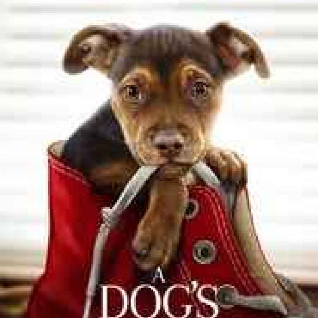 A Dog's Way Home watch full movie hd online 2019