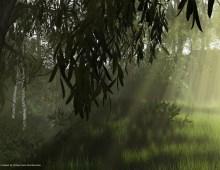 willowshadow1024b