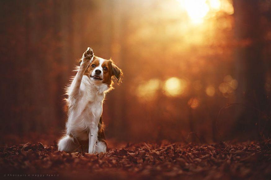 Cute Pet Animals Wallpapers Prachtige Foto S Van Honden In De Herfst Digifoto Starter