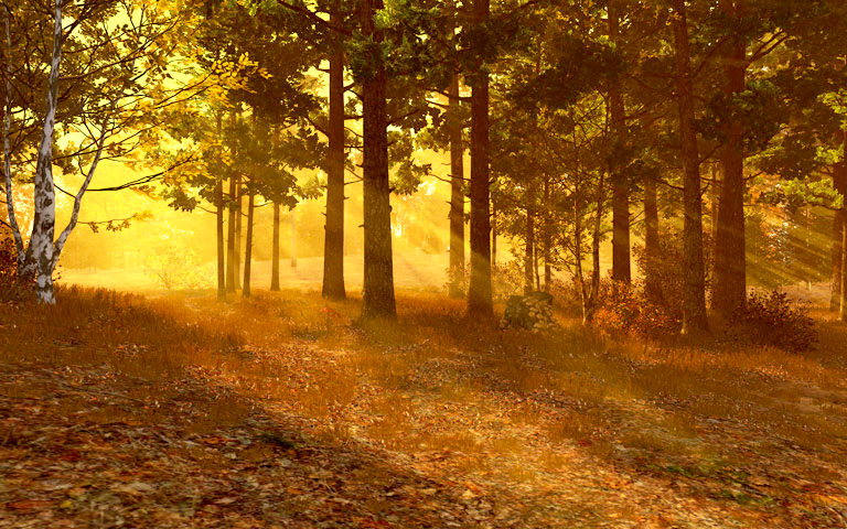 Fall Hd Wallpaper For Mac Autumn Forest 3d Screensaver Download Animated 3d