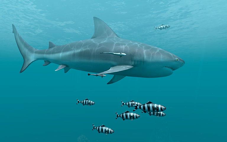 Live Wallpaper Fall Hd Sharks 3d Salvapantallas Descargar Salvapantalla