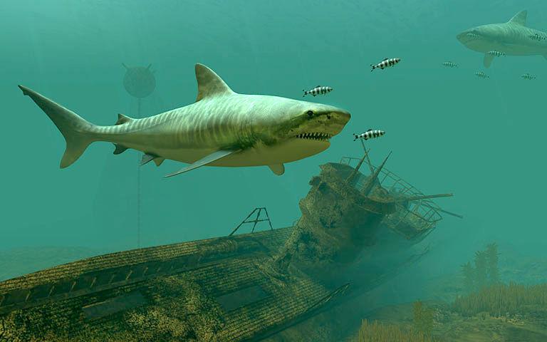 Animated Halloween Desktop Wallpaper Tiger Sharks 3d Screensaver Download Animated 3d Screensaver