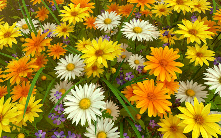 Occult Wallpapers Hd Wildflowers 3d Screensaver Download Animated 3d Screensaver