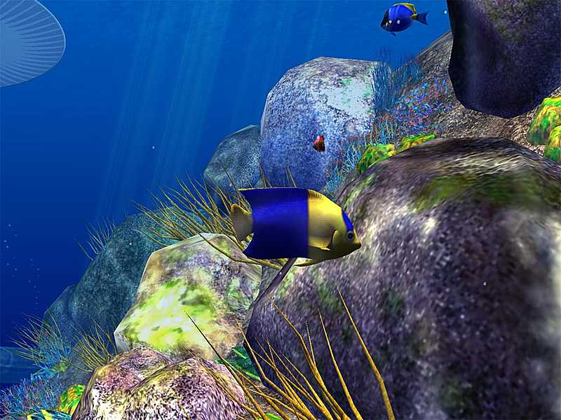 Fall Wallpaper With Animals Ocean Fish 3d Gallery Image 3 Of 3