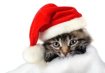 Digital Postcard Grusskarten zum Thema Katze
