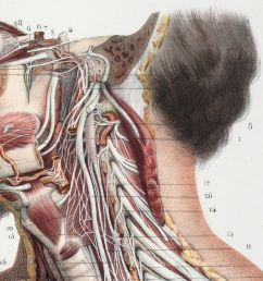 what 500 years of medical illustration has taught us about art and anatomy [ 1200 x 675 Pixel ]