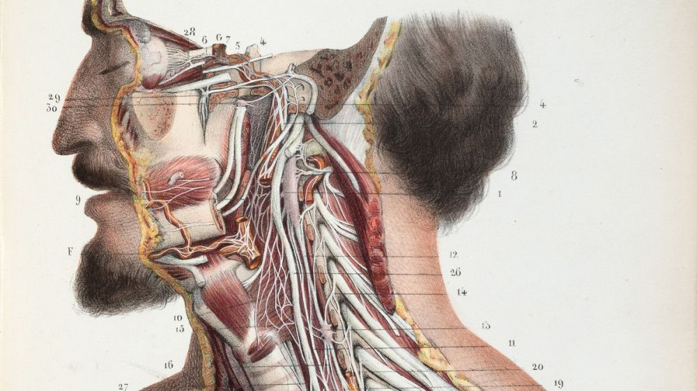 medium resolution of what 500 years of medical illustration has taught us about art and anatomy