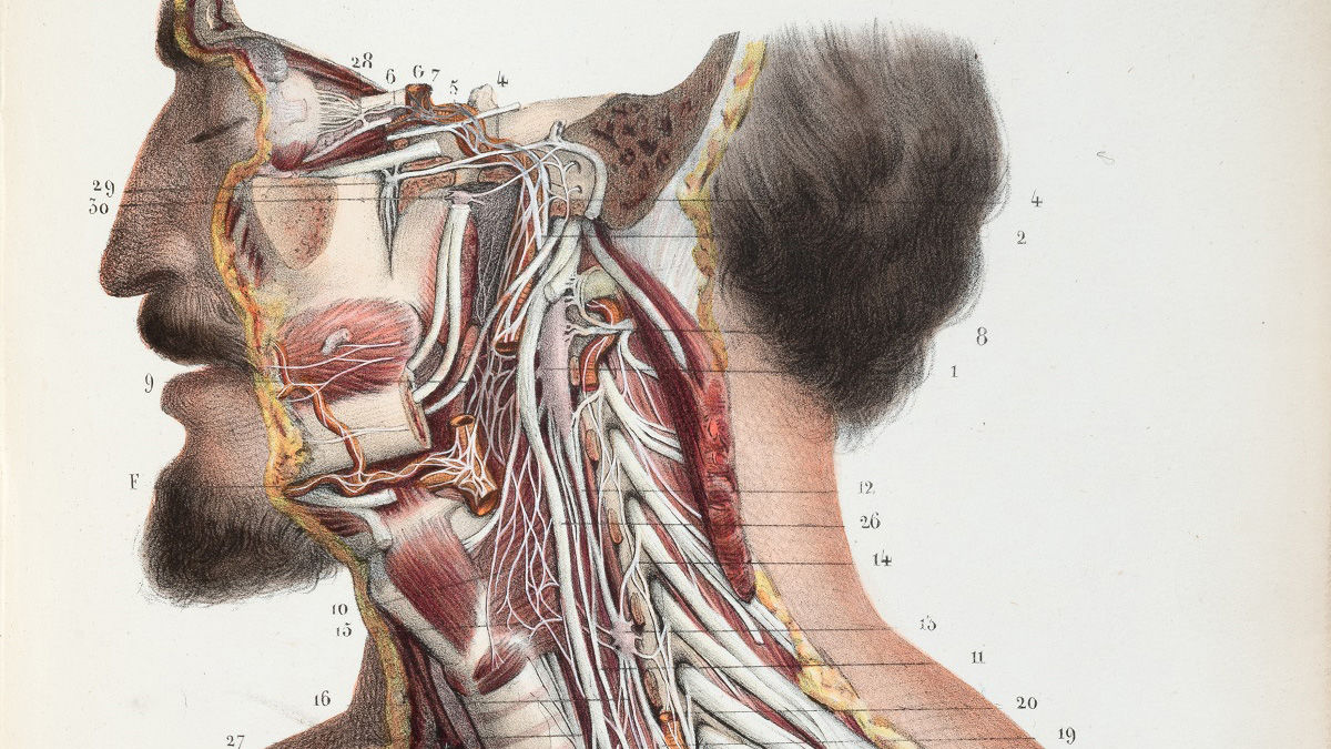 hight resolution of what 500 years of medical illustration has taught us about art and anatomy