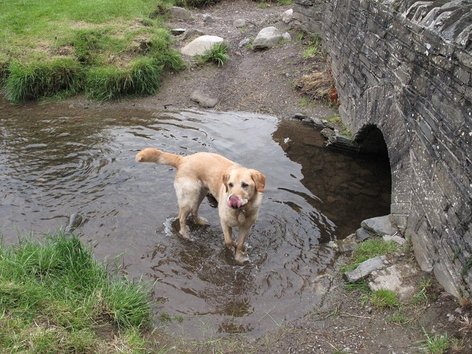 This shows Freddie walking through a shallow stream. As he's walking, he's licking his nose.  Very attractive!