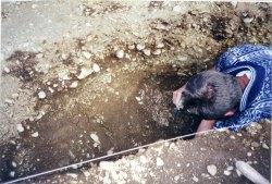 Image 9 - Prof. Julian Thomas excavating at Dunragit, 1999. Image copyright Anne Teather.
