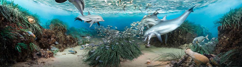 Digital Diorama  Mediterranean Sea