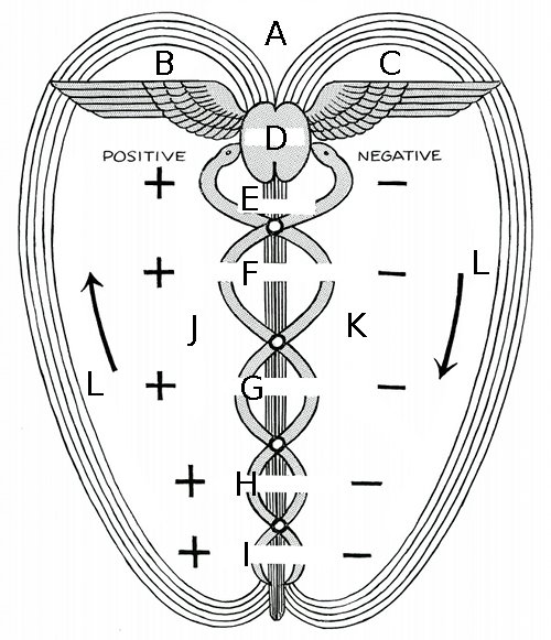 Polarity Therapy Volume 1, Book 3, Chart 01