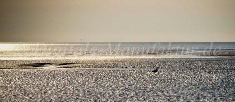 Nordseebilder-11