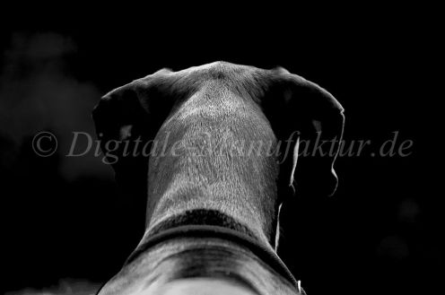 Tierfotograf-014