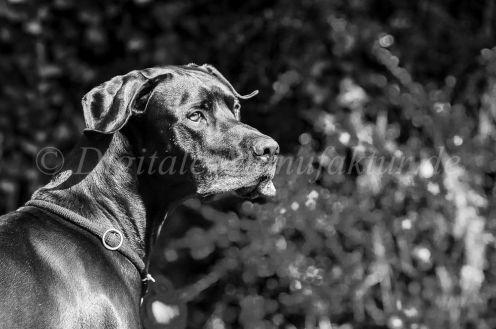 Tierfotograf-015