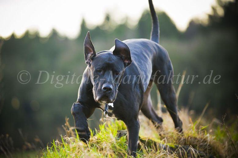 Tierfotograf-035