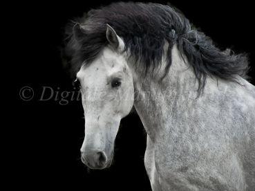 Tierfotograf-086