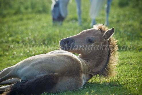 Tierfotograf-106
