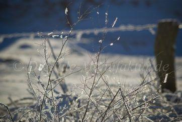 Winterlandschaft-43