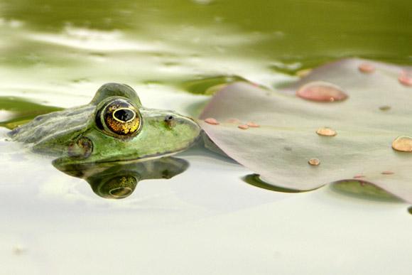 Frosch Flunsch