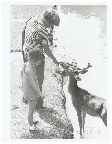 Petting the deer at Tanglewood Park, 1970.