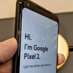 Google Pixel 2 and the Mushroom