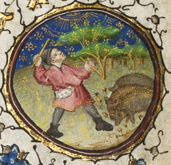 Image from the University of Reading' book of hours showing a peasant using a stick to knock down nuts for pigs on the ground under the tree.