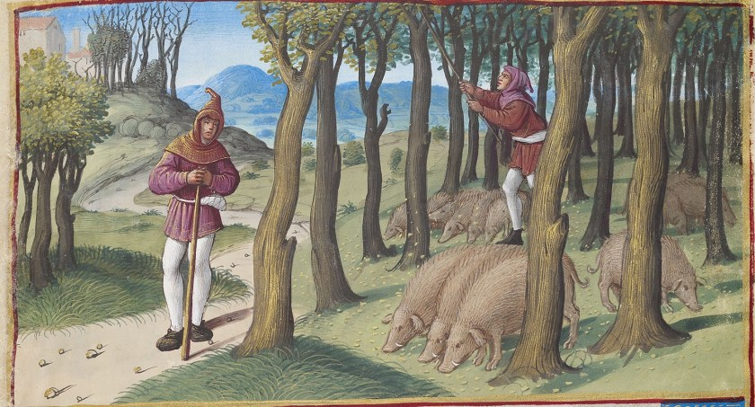 November image from the Hours of Henry VIII shoiwing two men knocking down acorns for the pigs below the trees