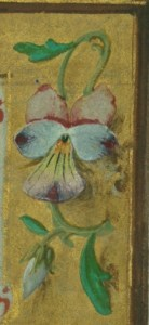 detail of a pansy or heartsease blossom from the border of the May calendar image in Walters W.425