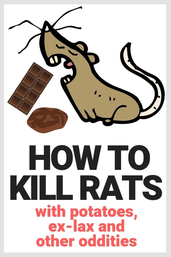 kill rats potato exlax
