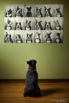 dog-photo-wall