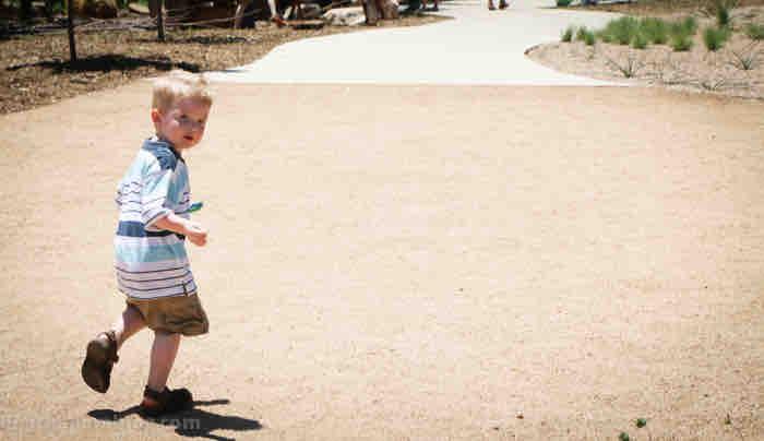 Lady Bird Johnson Wildflower Center austin texas family road trip family garden