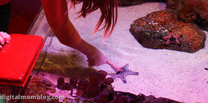 touching starfish at sea life aquarium