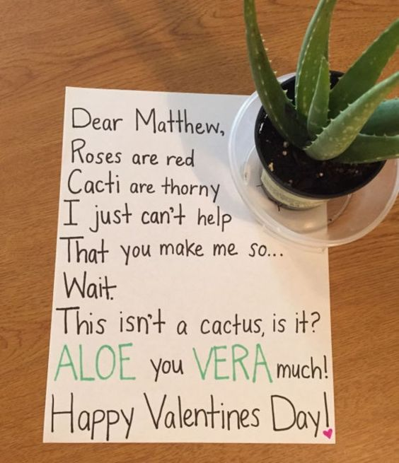 Dear Matthew Roses are red, cacti are thorny. I just can't help that you make me so, wait. This isn't a cactus is it? Aloe you Vera much. Happy Valentine's day - photo of aloe vera and note