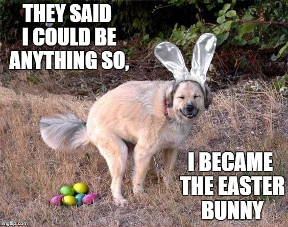 They said I could be anything so I became the easter bunny - dog pooping eggs