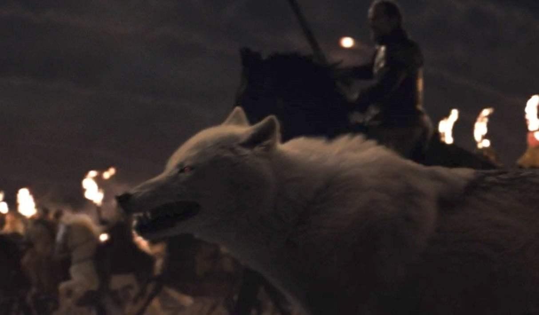 Jon Snows Dire Wolf Ghost Alive or Dead