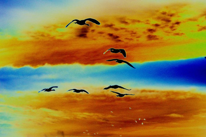 Flying-geese_curves