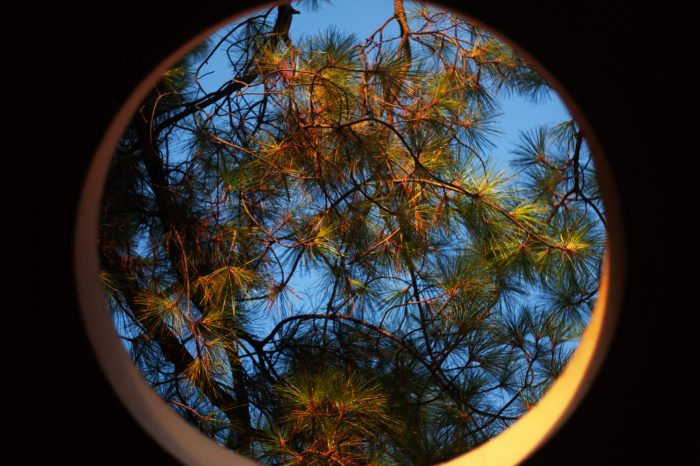 A135_9:13:2020_Pine_Trees_Curves