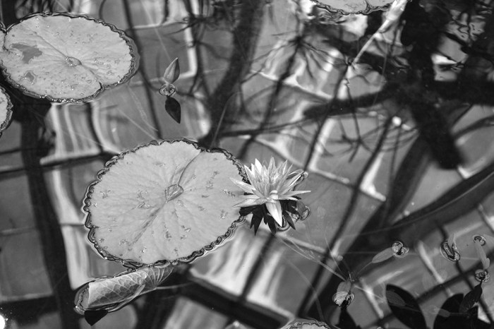 Architecture 104 SF Lily Pad Black & White