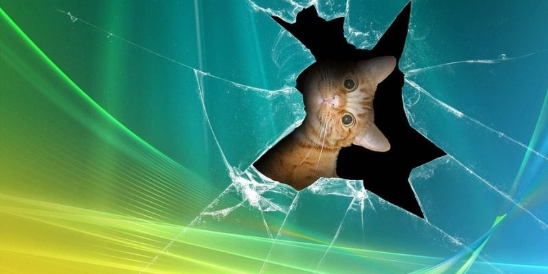 little cat is looking from the inside of the broken PC screen
