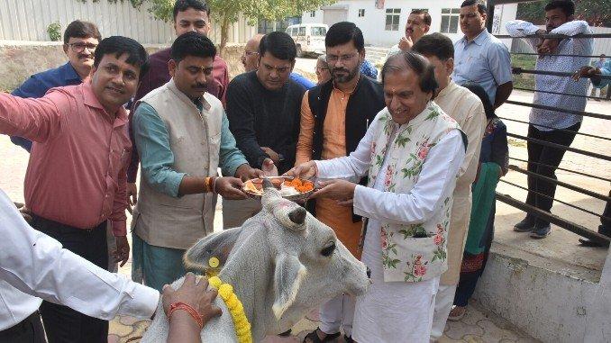 Dinesh Shahra Foundation Conducts Gau Shakti Abhiyan At Kanha Upvan Gaushala Near Banaras - Digpu