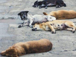 Stray Dogs or Stray Deer? - Digpu News
