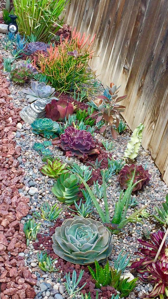catchy outdoor succulent garden