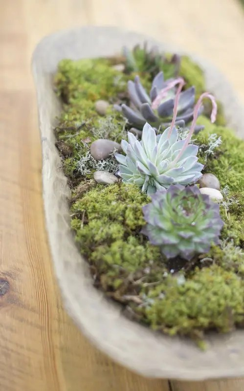 decorate kitchen ikea cabinet installation how to display succulents: 30 cute examples - digsdigs