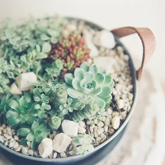Fall Succulent Wallpaper How To Display Succulents 30 Cute Examples Digsdigs