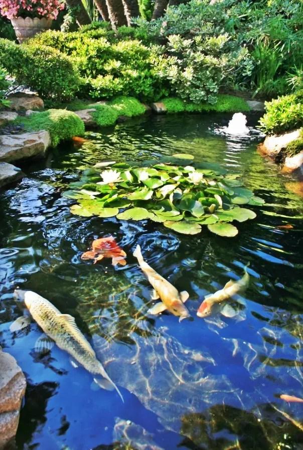 Natural Backyard Pond