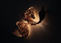 Surrealistic And Unusual Fish Lamps | DigsDigs